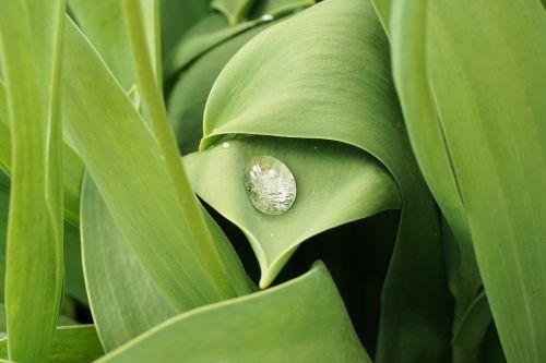 drop of water dew leaf