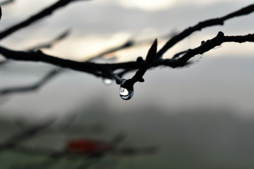 drop of water,dew,dewdrop,autumn,leaf,nature,water,plant,grass,drip,drops of morning dew,close,dew drops,fog,thaw