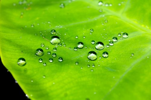 droplets water leaf