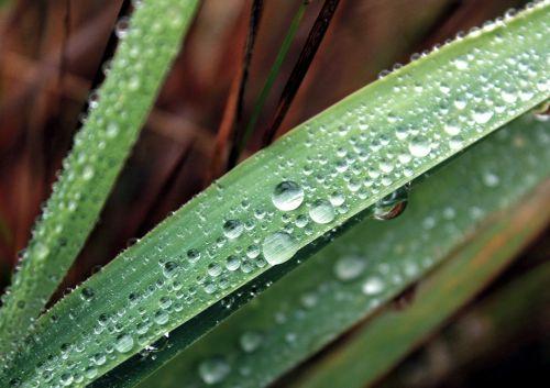 drops kvilda nature