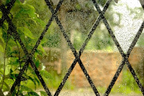 drops rain grateful