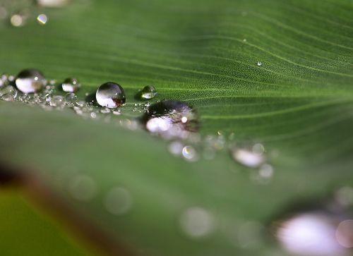 drops drops of water water