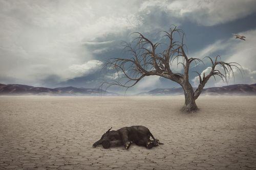 drought desert elephant