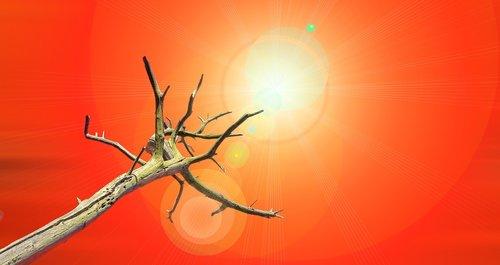 drought  tree  dead plant