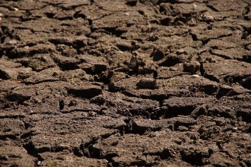 drought dry nature