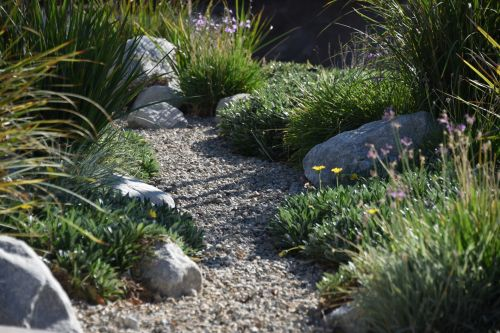 Drought Friendly Garden