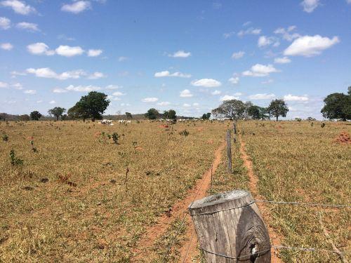dry pasture livestock