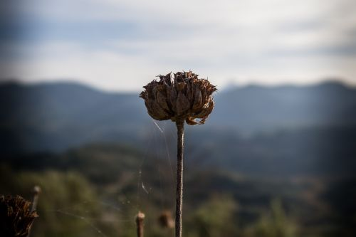 dry,flower,plant,spider,web,outdoor,nature