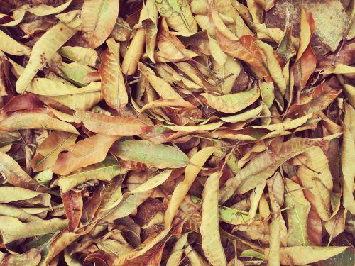dry leaves fallen