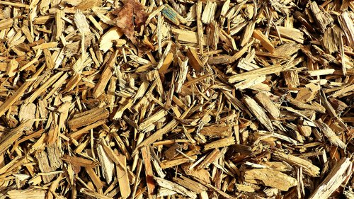 dry  lot  grass