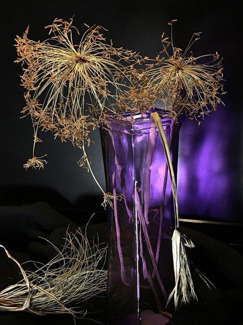 dry  plant papyrus  papyrus