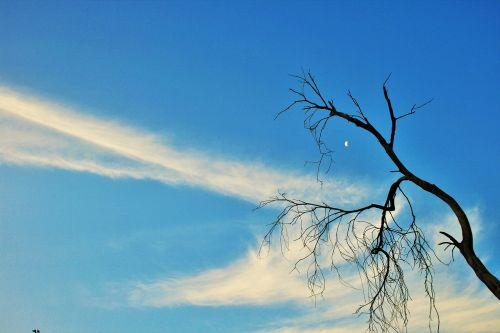 dry branch tree dry