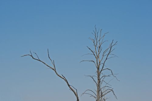 Dry Branches Against Sky