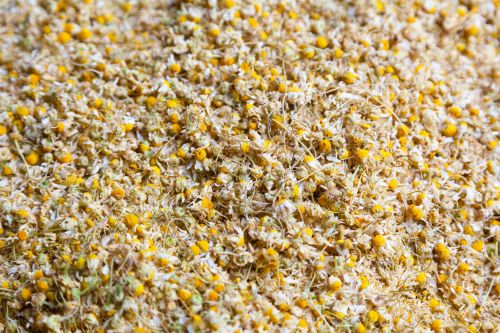 Dry Camomile