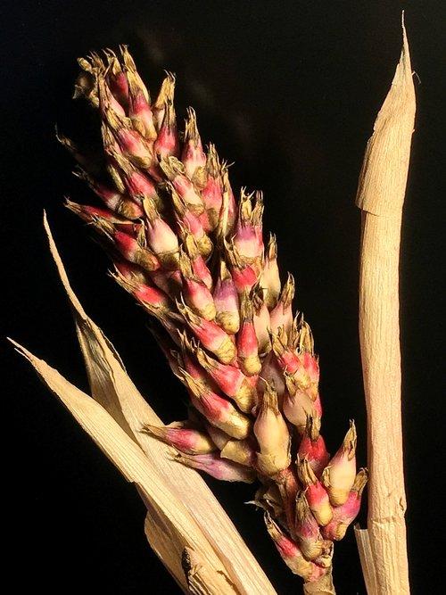 dry flower  seeds  dry