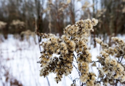 dry flowers plant winter