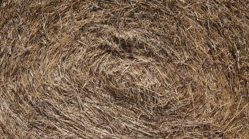 dry grass farm straw