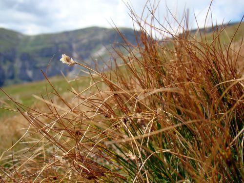 dry grass grass mountains