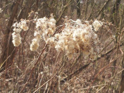 dry grass spring straws