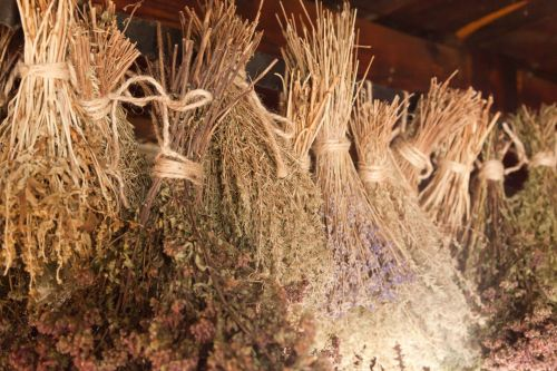 Dry Herbs Hanging