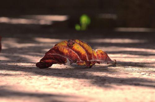 dry leaf autumn dry