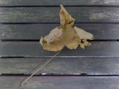 Dry Leaf 2