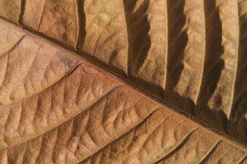 dry leaf leaf autumn