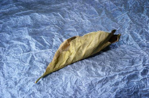 Dry Leaf On Tissue Paper