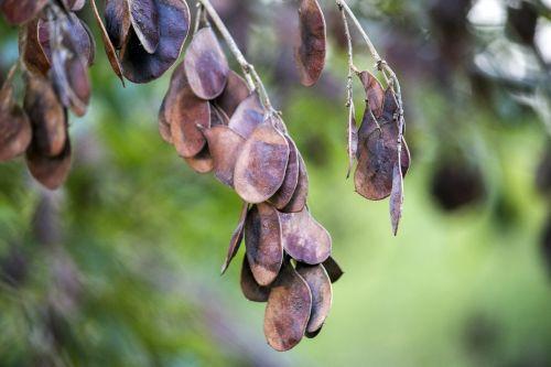 dry leaves tree nature