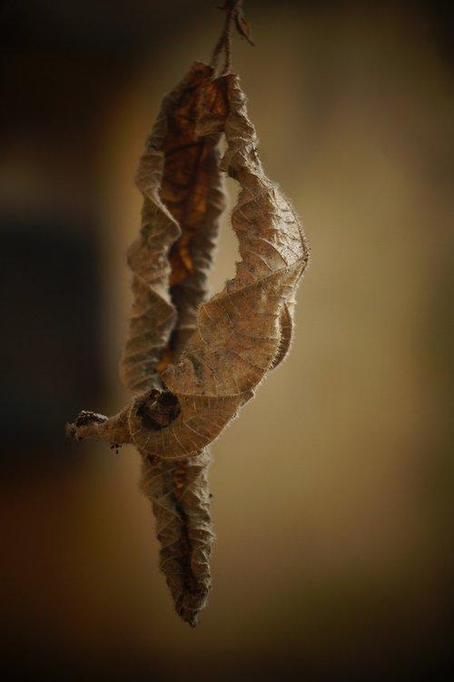 dry leaves  nature  leaf