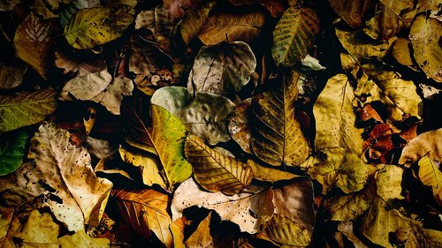 dry leaves  fallen  dry