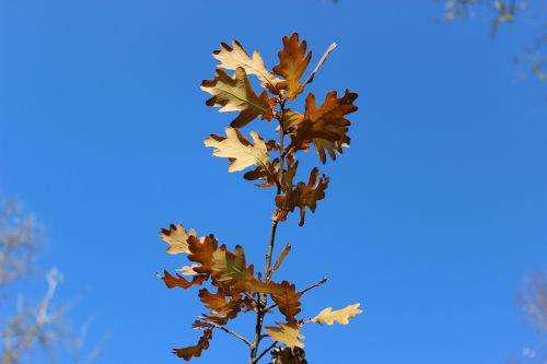 dry leaves leaves autumn
