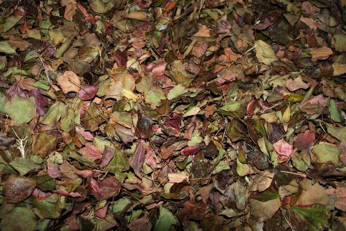 Dry Leaves Composting