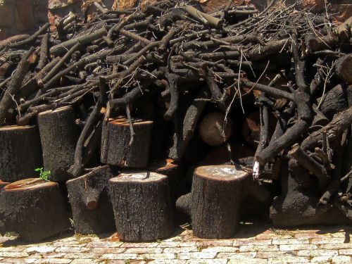 Dry Logs And Branches