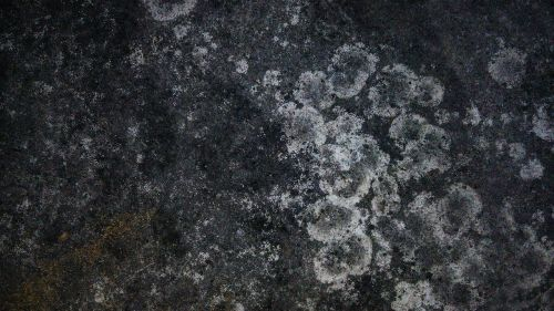 dry moss moss stain texture