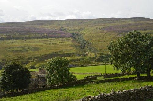 dry-stone wall  heather  purple