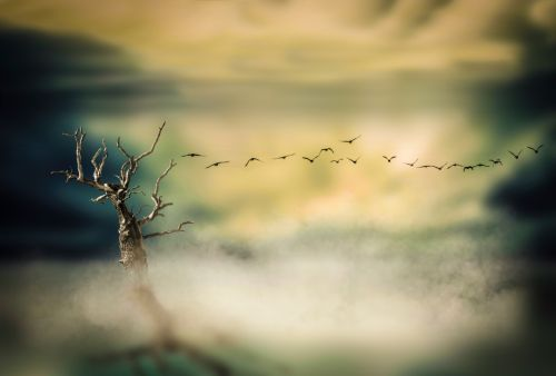 Dry Tree And Fog