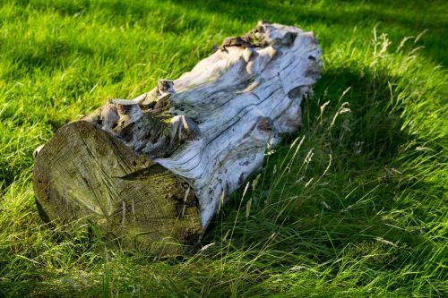 Dry Tree Trunk On Grass