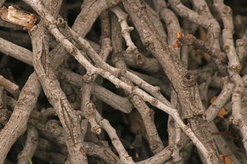 Dry Wooden Twigs