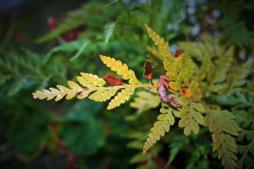 Drying Leaf Of Fern