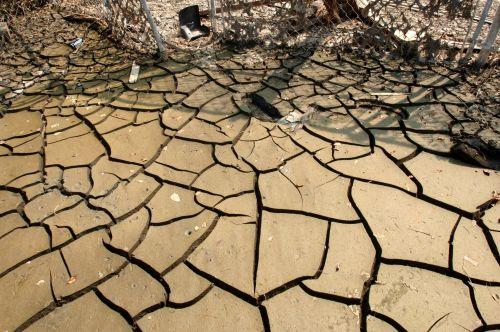 Drying Mud Cracks
