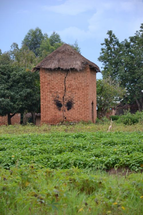 drying tower uganda agriculture