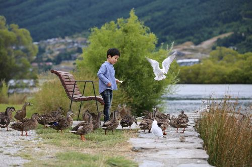 duck birds feed