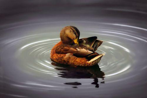 duck pond lake