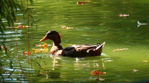 duck park water