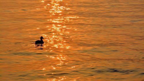 duck lake sunset