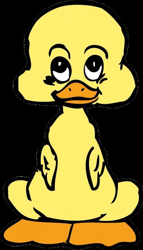 duck duckling bird