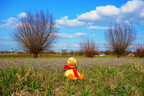 duck stuffed animal cuddly toy