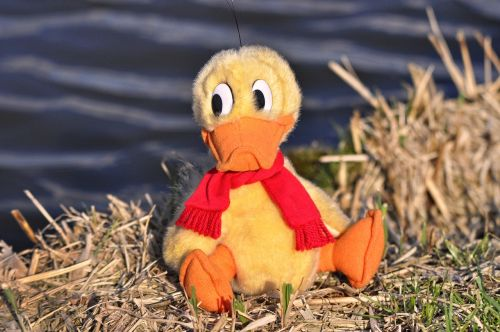 duck bird animal