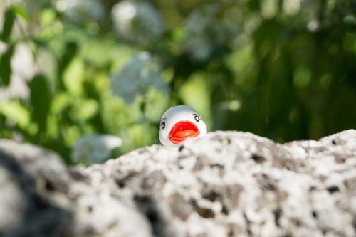 duck stone white